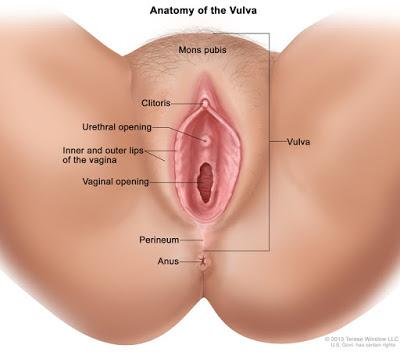 Vagina Istri Sampai Orgasme