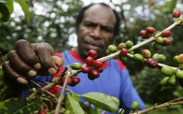 Kopi Papua Wamena 1
