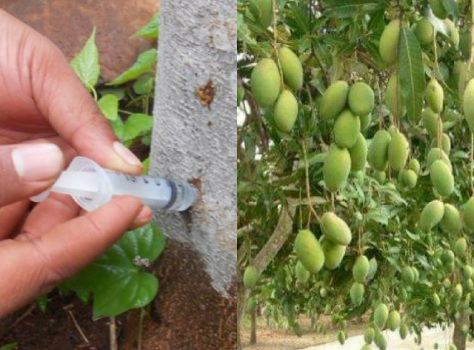 buah (1)