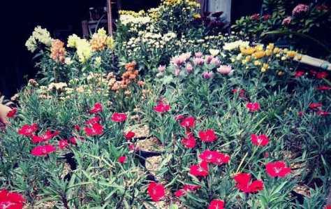 17. Wisata Bunga di Pasar Bunga Bratang
