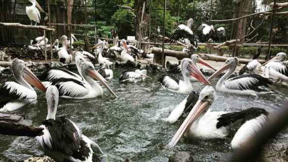 3. Kebun Binatang Surabaya